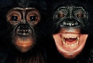 James Mollison c-c-crazy :: James & Other Apes