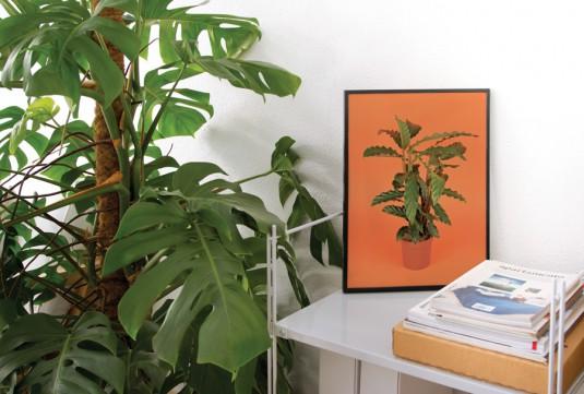 © Flora Indoor