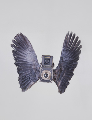 Paul Octavious :: Birds of Aperture