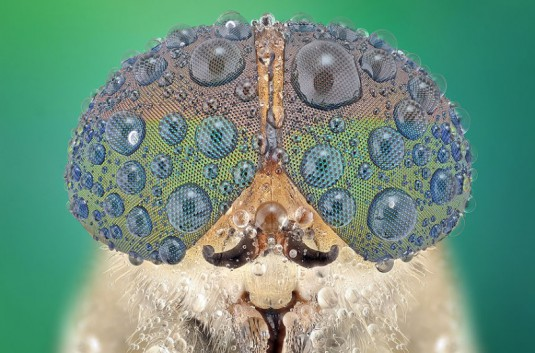 YUDY_SAUW_MICROSCOPE_INSECTS_3
