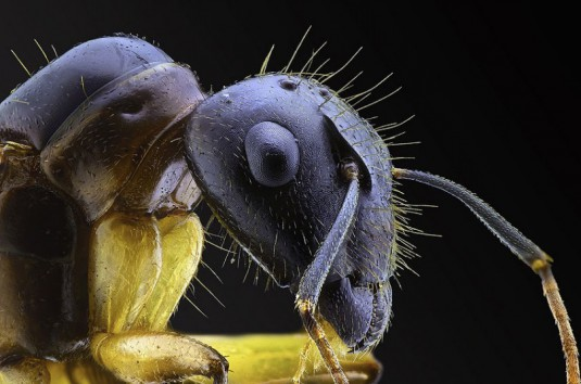 YUDY_SAUW_MICROSCOPE_INSECTS_4