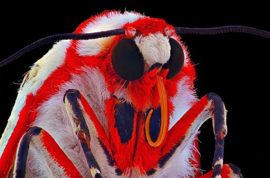 YUDY_SAUW_MICROSCOPE_INSECTS_5