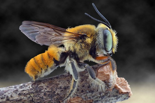 YUDY_SAUW_MICROSCOPE_INSECTS_6