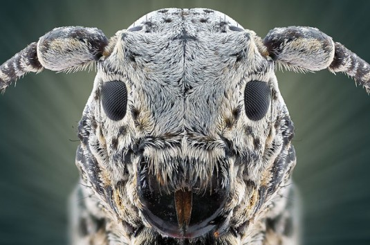 YUDY_SAUW_MICROSCOPE_INSECTS_7