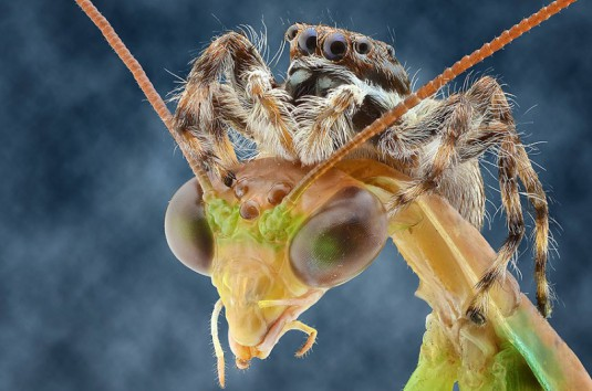 YUDY_SAUW_MICROSCOPE_INSECTS_9
